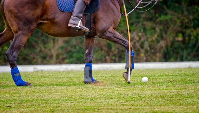 11th Annual Polo for Parkinson's
